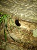 Caterpillar lanoso fotos de archivo libres de regalías