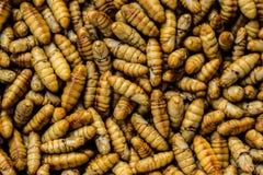 Caterpillar, larva de farinha, larva, sem-fim, isca de pesca fotos de stock