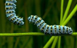 Caterpillar of love 3D Model Stock Photo