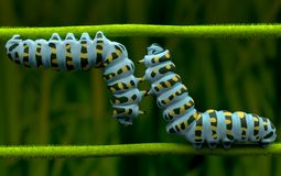 Caterpillar of love in small world Stock Image