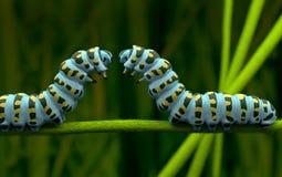 Caterpillar of love in small world Stock Photo