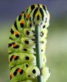 Caterpillar. Macro shot of Caterpillar playing floute Stock Photography
