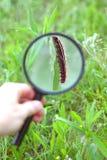 Caterpillar through Magnifying Glass Stock Image