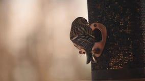 Caterpillar mangeant des feuilles banque de vidéos