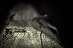 Caterpillar melenudo Imagenes de archivo