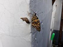 Caterpillar motyl zdjęcie stock