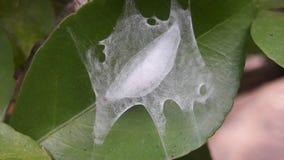 Caterpillar na folha Imagem de Stock