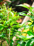 Caterpillar na małym drzewnym widoku Zdjęcia Stock