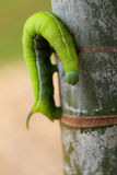 Caterpillar Royalty-vrije Stock Foto