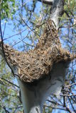 Caterpillar Nest Royalty Free Stock Images