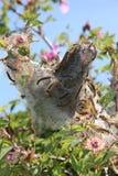 Caterpillar nest Stock Photography