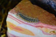 Caterpillar no arenito Imagens de Stock Royalty Free