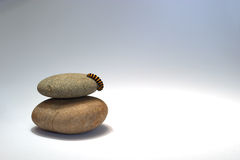Free Caterpillar On Pebbles Royalty Free Stock Photography - 14617