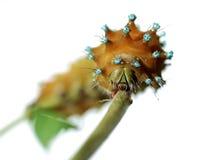 Free Caterpillar On White 2 Stock Photo - 3248130