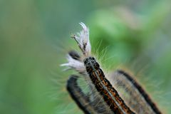 Caterpillar ona green plant leaf Royalty Free Stock Photos