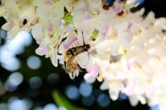 Caterpillar op Bloemen, Orchideeën wordt neergestreken die stock foto's