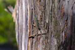 Caterpillar op een boom Stock Afbeelding