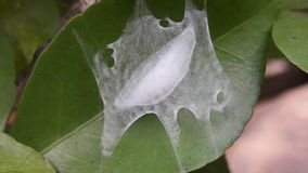 Caterpillar op het blad Stock Afbeelding