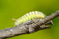 Caterpillar overcomes obstacles. To find food Royalty Free Stock Photos