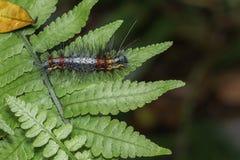 Caterpillar på bladet Arkivbilder