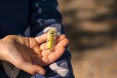 Caterpillar på en hand royaltyfria foton
