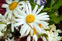 Caterpillar på flower_1 Arkivfoto
