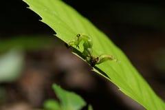 Caterpillar på leafen Royaltyfria Bilder