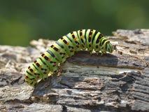 Caterpillar på naturen Arkivbild