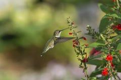 Caterpillar precis ovanför hans näbb fotografering för bildbyråer