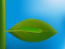 Caterpillar que camina en la hoja imagen de archivo libre de regalías