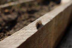 Caterpillar que se arrastra en el tablero foto de archivo
