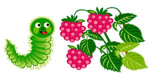 Caterpillar and raspberry Stock Photos