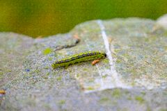 Caterpillar on rock Royalty Free Stock Photography