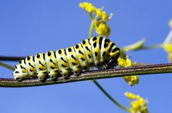 Caterpillar. The caterpillar is scrolling on the stem Stock Image