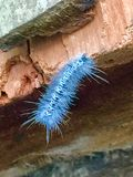 Caterpillar. Searcing for a place to hang and make my cacoon so I may fly to distant land Stock Photos