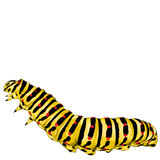 Caterpillar sketch vector graphics Stock Images