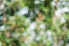 Caterpillar som hänger på dess siden- tråd royaltyfri foto
