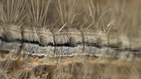 Caterpillar som långsamt flyttar sig