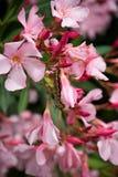 Caterpillar som matar på blomman Arkivfoton
