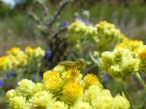 Caterpillar a souillé avec le nectar Image stock