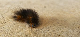 Caterpillar on a spring day. Caterpillar spring   day nature closeup royalty free stock images