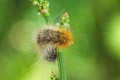 Caterpillar su erba Fotografie Stock Libere da Diritti