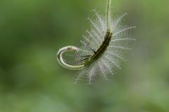 Caterpillar in Sud-est asiatico immagini stock libere da diritti