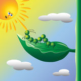 Caterpillar on the sun. Illustration of caterpillar on the sun Royalty Free Stock Image