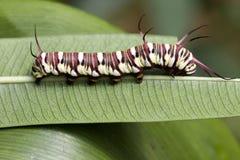 Caterpillar Super Macro Stock Photos