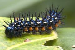 Caterpillar Super Macro Stock Images
