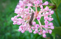 Caterpillar sur la fleur Images libres de droits