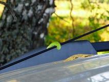 Caterpillar sur la forêt d'antenne d'autoradio en septembre photographie stock libre de droits