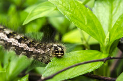 Caterpillar tahun Stock Photography