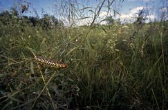 Caterpillar in thickets in summer stock images